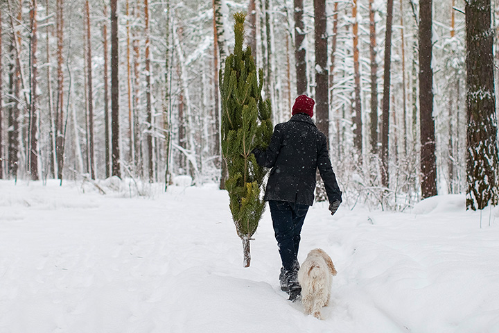 The 8 Best Places to Cut Your Own Christmas Tree in Alaska!