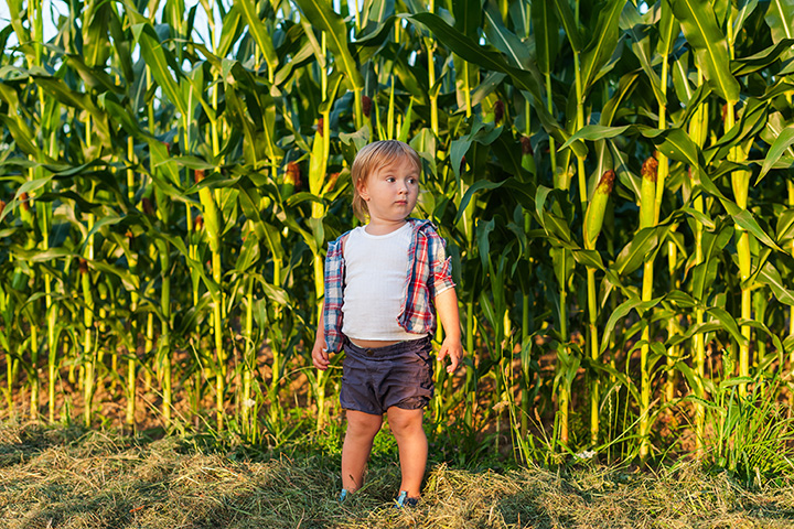 The 8 Best Corn Mazes in Alabama!