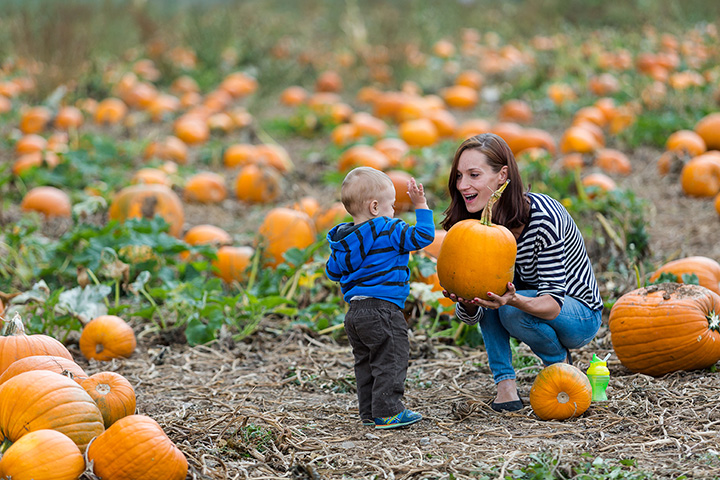 The 8 Best Pumpkin Picking Spots in Arkansas!