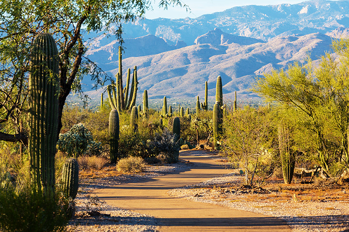 Editors' Picks: 20 of the Best Things to Do in Arizona!