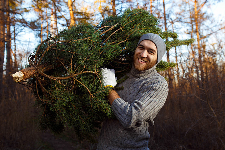 The 10 Best Christmas Tree Farms in Arizona!