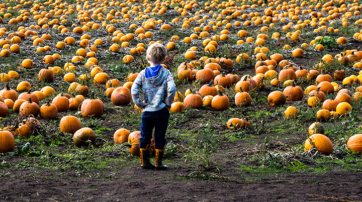 10 Best Pumpkin Patches in Colorado!