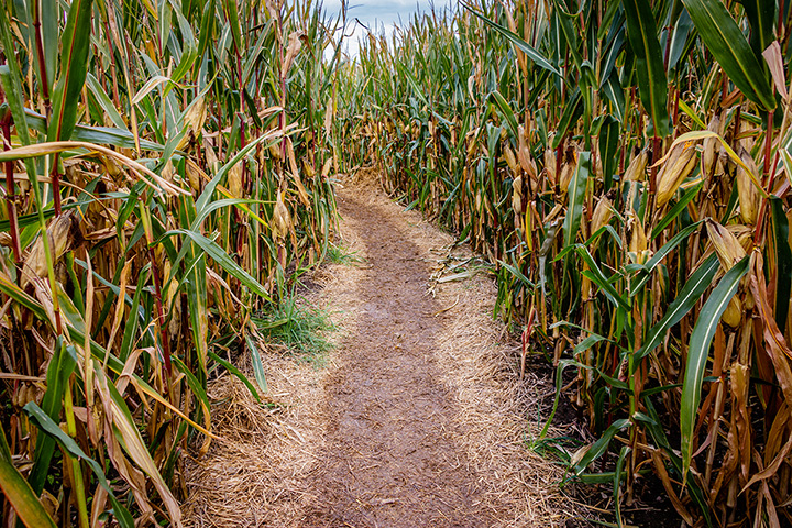 The 9 Best Corn Mazes in Connecticut!