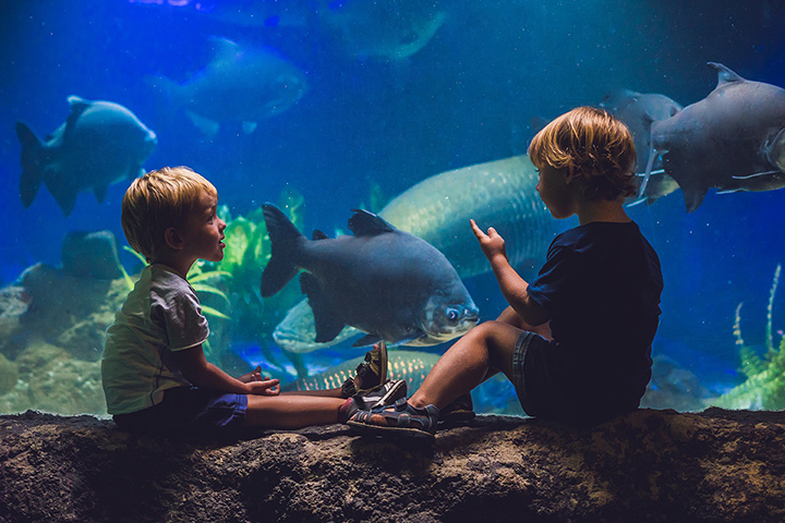 The 10 Best Educational Activities for Children in Connecticut!