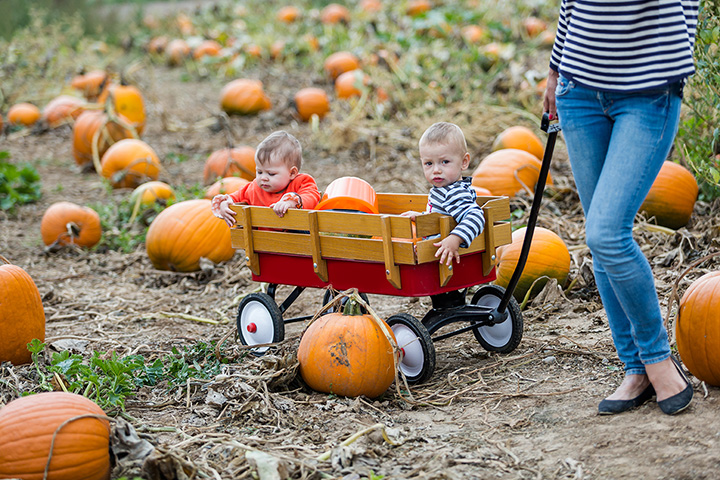 The 10 Best Pumpkin Picking Spots in Connecticut!