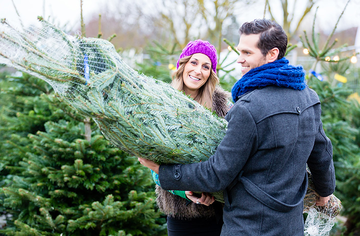 The 9 Best Christmas Tree Farms in Delaware!