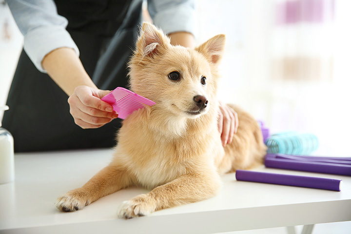 The 10 Best Pet Groomers in Delaware!