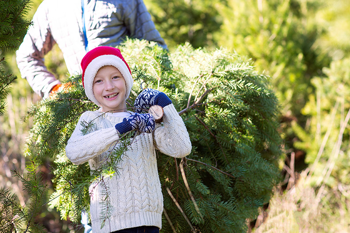 The 10 Best Christmas Tree Farms in Florida!