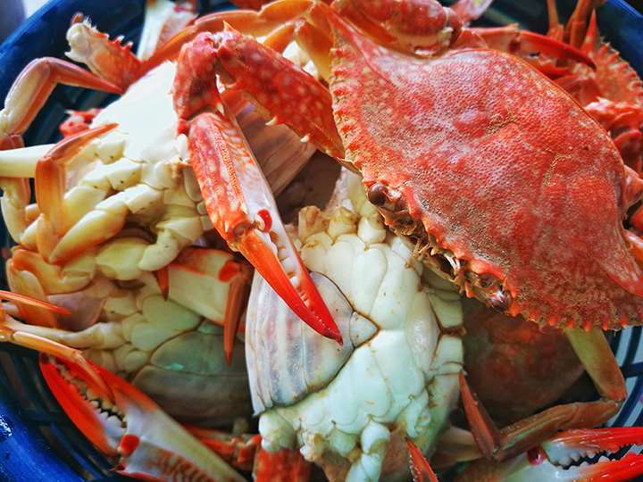The 10 Best Places for Crab in Florida!