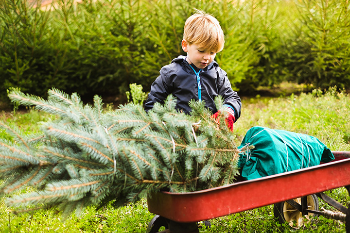 The 8 Best Christmas Tree Farms in Idaho!