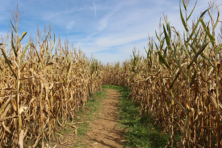 The 10 Best Corn Mazes in Idaho!