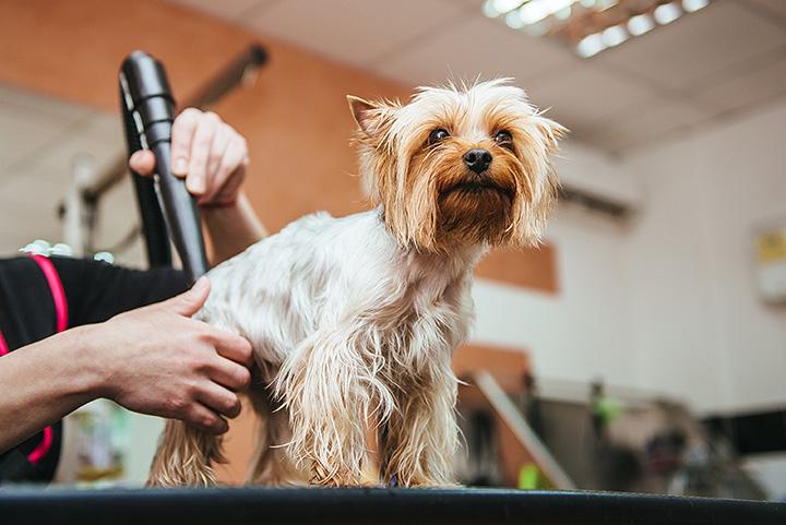 The 10 Best Pet Groomers in Idaho!