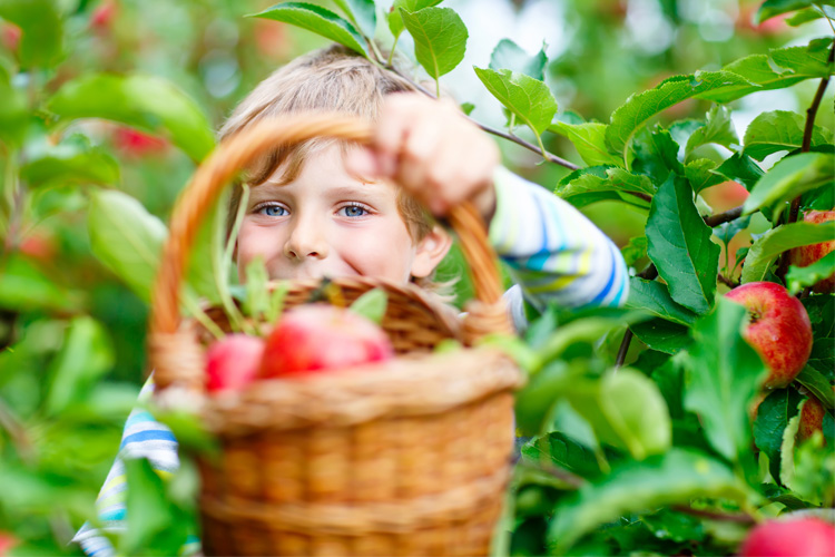 The 9 Best Apple Picking Spots in Illinois!