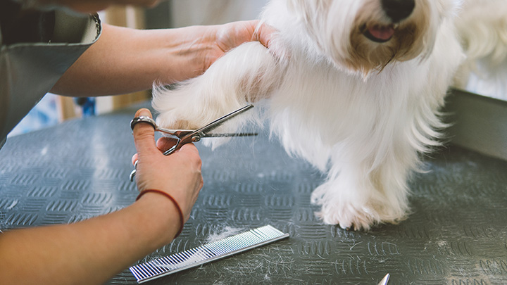 The 10 Best Pet Groomers in Illinois!