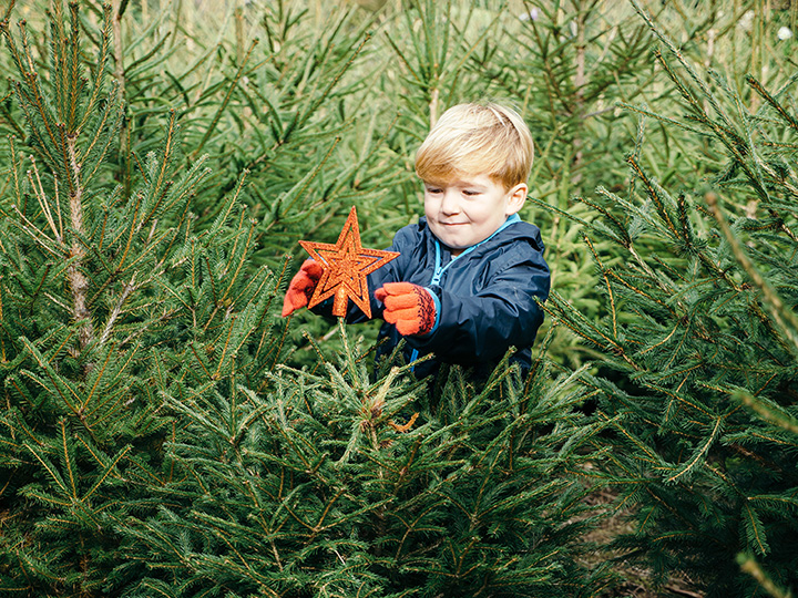 The 10 Best Christmas Tree Farms in Kansas!