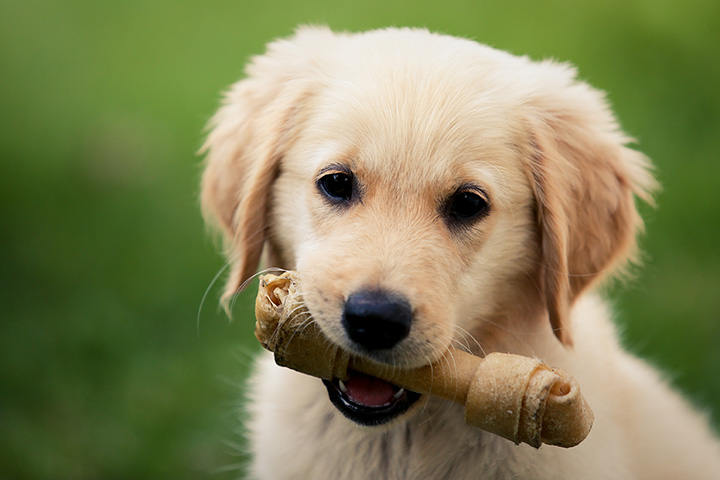 The 10 Best Pet Stores in Kansas!