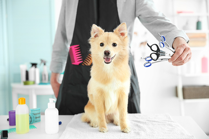 10 Best Pet Groomers in Kentucky