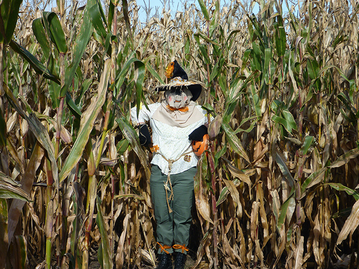 The 5 Best Corn Mazes in Louisiana!