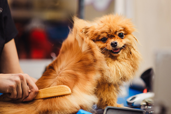 10 Best Pet Groomers in Louisiana
