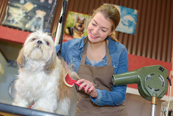 The 10 Best Pet Groomers in Maine!