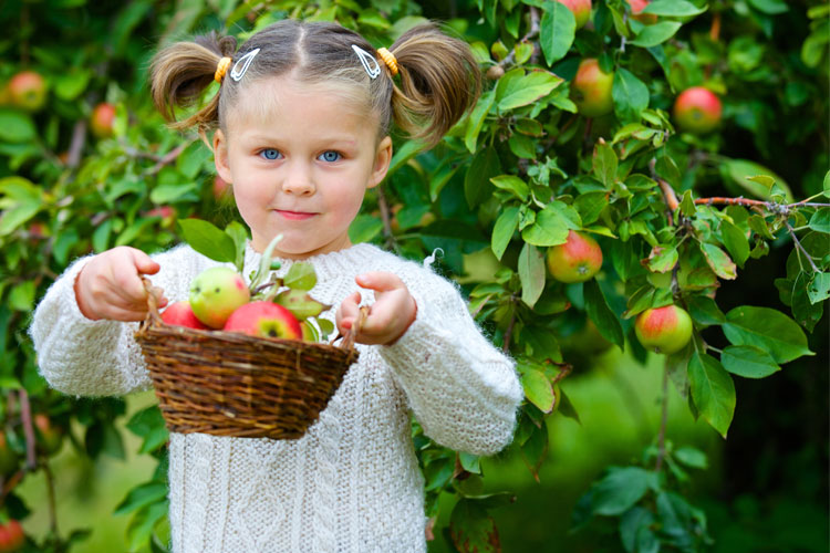 The 8 Best Apple Picking Spots in Michigan!