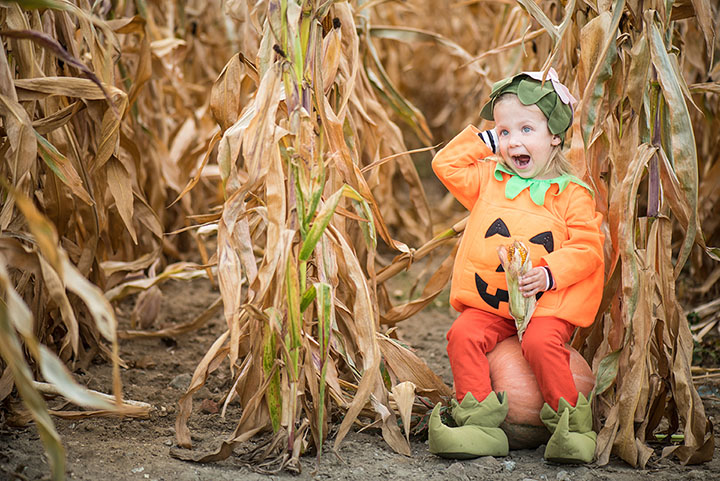 The 9 Best Corn Mazes in Michigan!