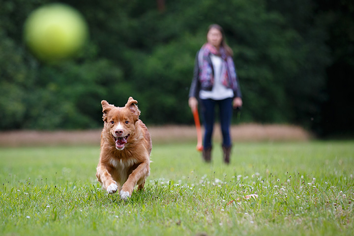The 10 Best Dog Parks in Michigan!