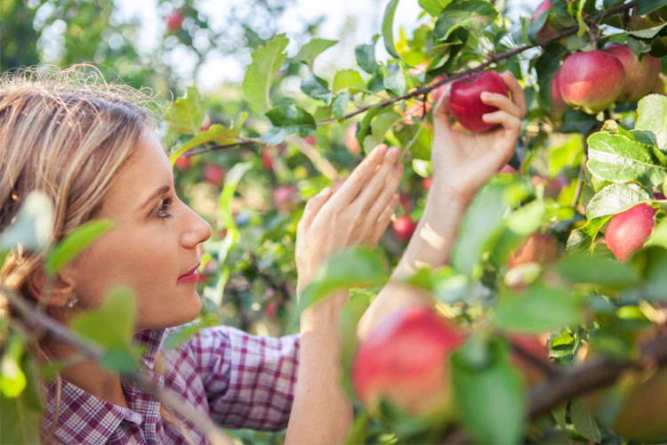 The 10 Best Apple Orchards in North Carolina!