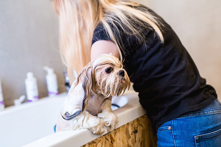 The 10 Best Pet Groomers in North Carolina!