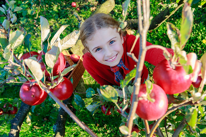 The 6 Best Apple Picking Spots in Nebraska!