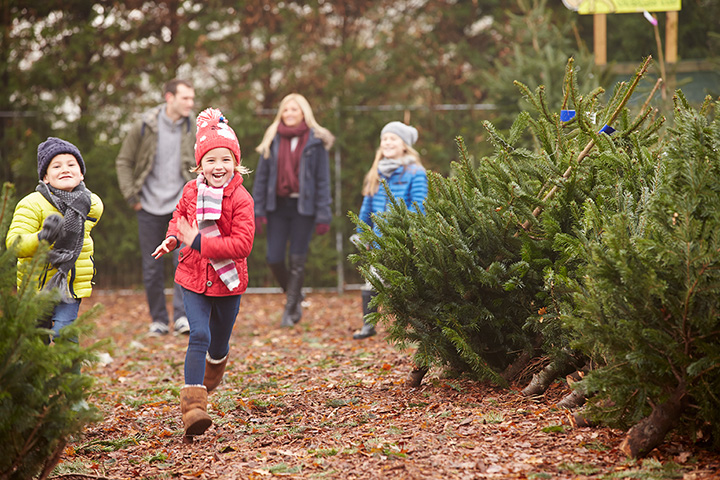 The 10 Best Christmas Tree Farms in New Hampshire!