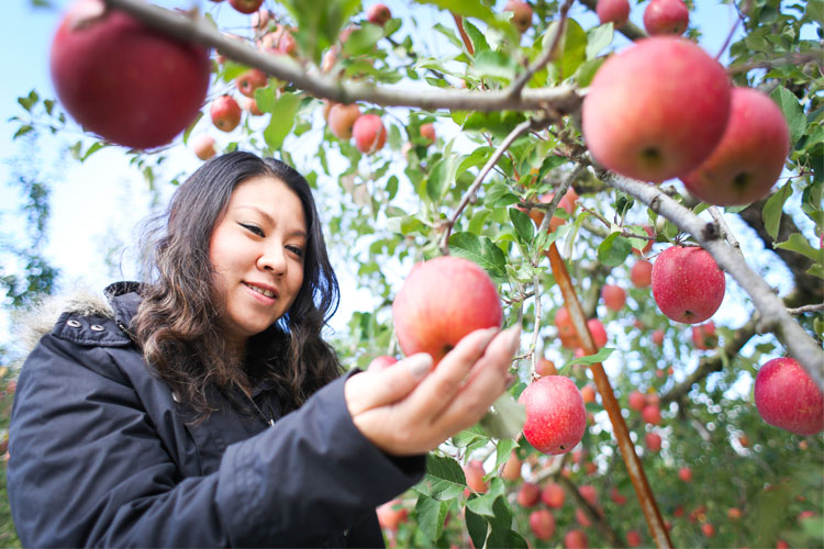 The 10 Best Apple Picking Spots in New Jersey!