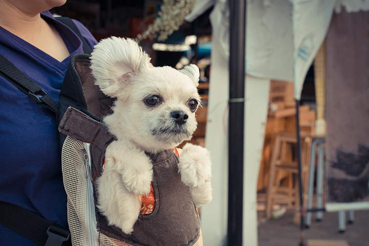 The 10 Best Pet Stores in New Mexico!