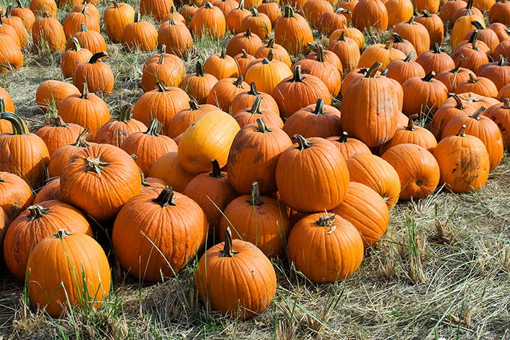 The 10 Best Pumpkin Picking Spots in New Mexico!