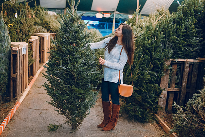 5 Best Spots to Buy Christmas Trees in Nevada
