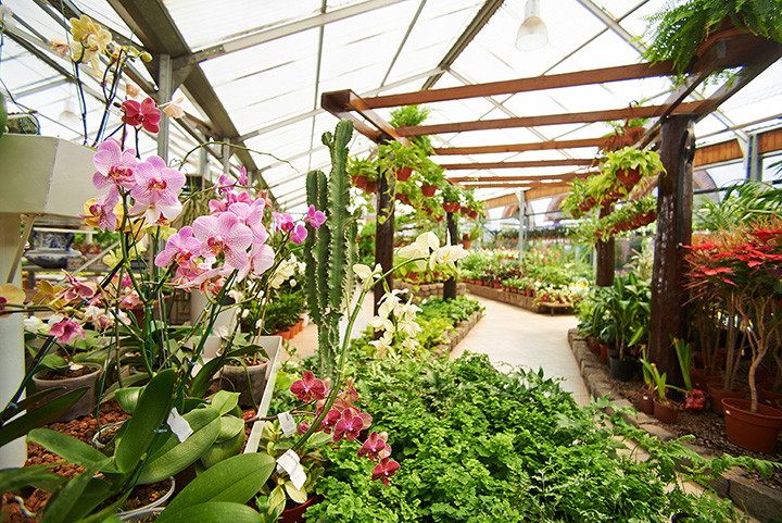The 10 Best Garden Centers and Nurseries in Nevada!