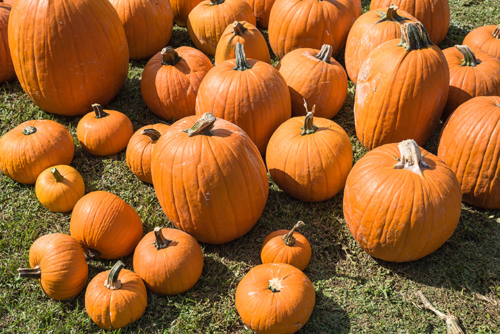 The 8 Best Pumpkin Picking Spots in Nevada!