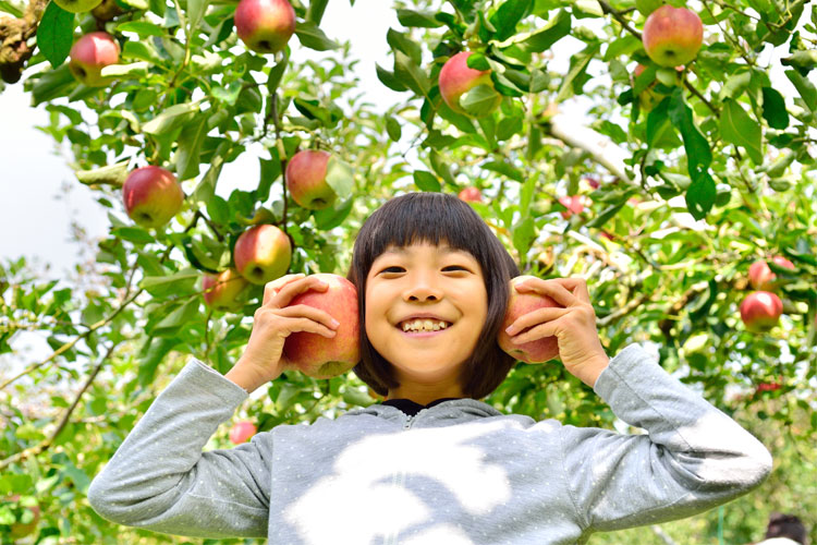 The 10 Best Apple Picking Spots in New York!
