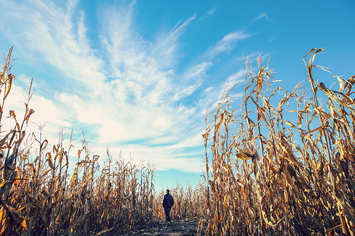 The 8 Best Corn Mazes in Oregon!