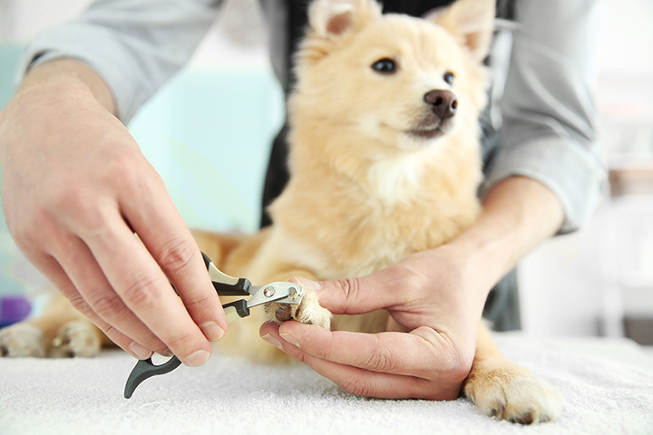 10 Best Pet Groomers in Oregon