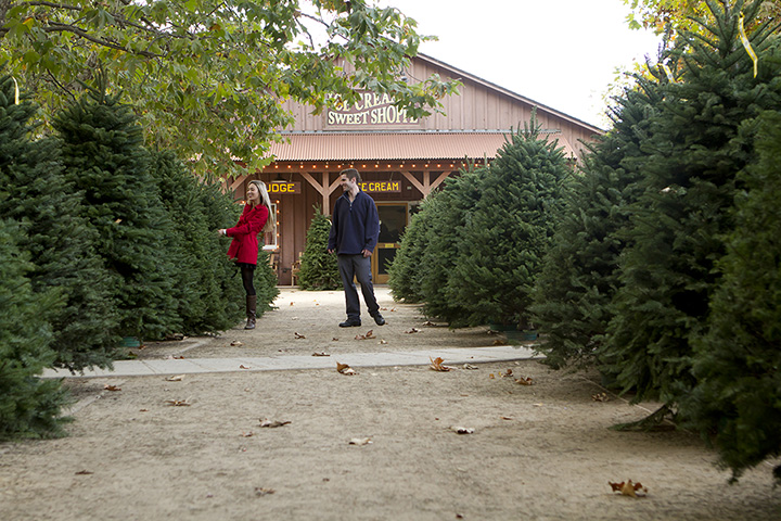 The 10 Best Christmas Tree Farms in South Carolina!