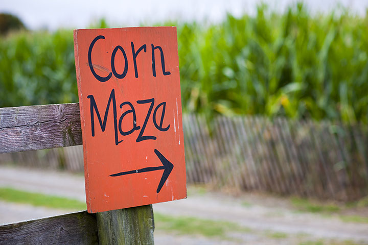 The 10 Best Corn Mazes in South Carolina!