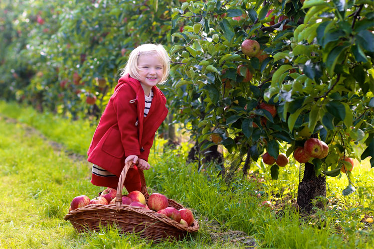 The 4 Best Apple Orchards in South Dakota!