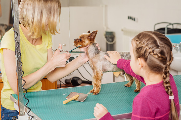 The 10 Best Pet Groomers in South Dakota!