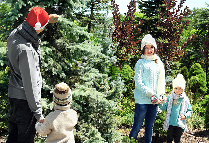 The 10 Best Christmas Tree Farms in Texas!