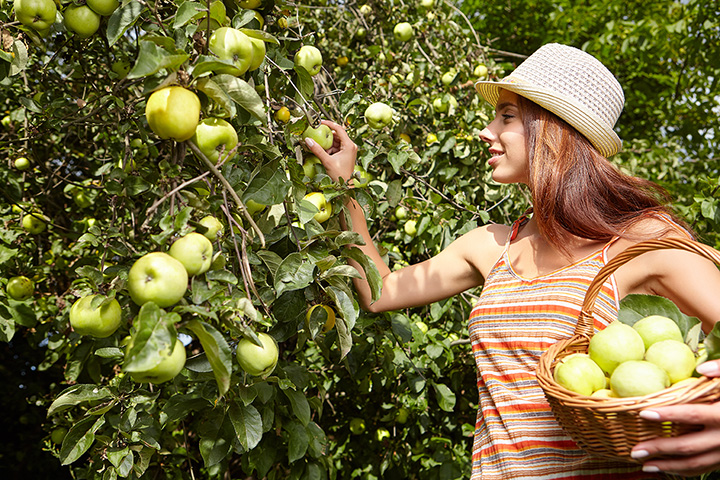 The 6 Best Apple Orchards in Utah!