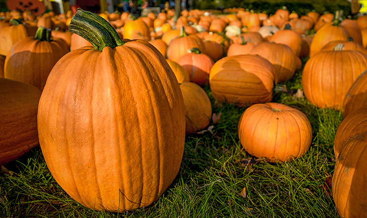 The 10 Best Pumpkin Picking Spots in Utah!