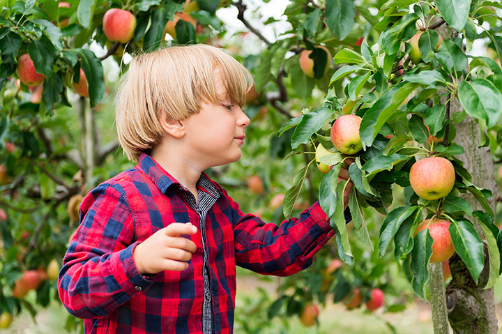 The 10 Best Apple Picking Spots in Virginia!