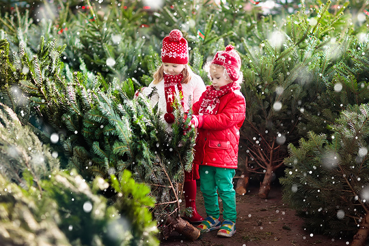 The 10 Best Christmas Tree Farms in Vermont!