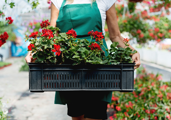 The 10 Best Garden Centers and Nurseries in Vermont!